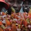 Somalia imposes Kenyan khat import ban